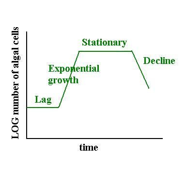 General phytoplankton growth curve -- lag, exponential growth,