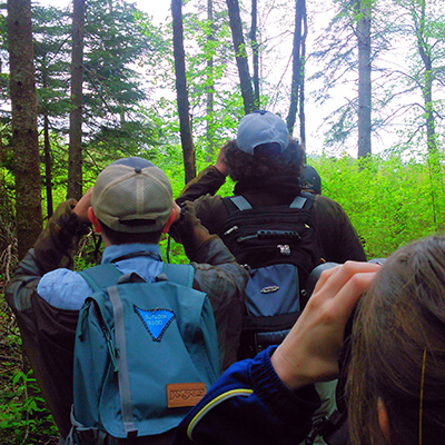 birdwatchers in forest