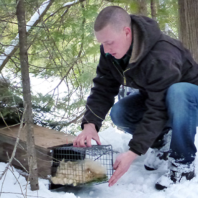 student with marten in humane trap