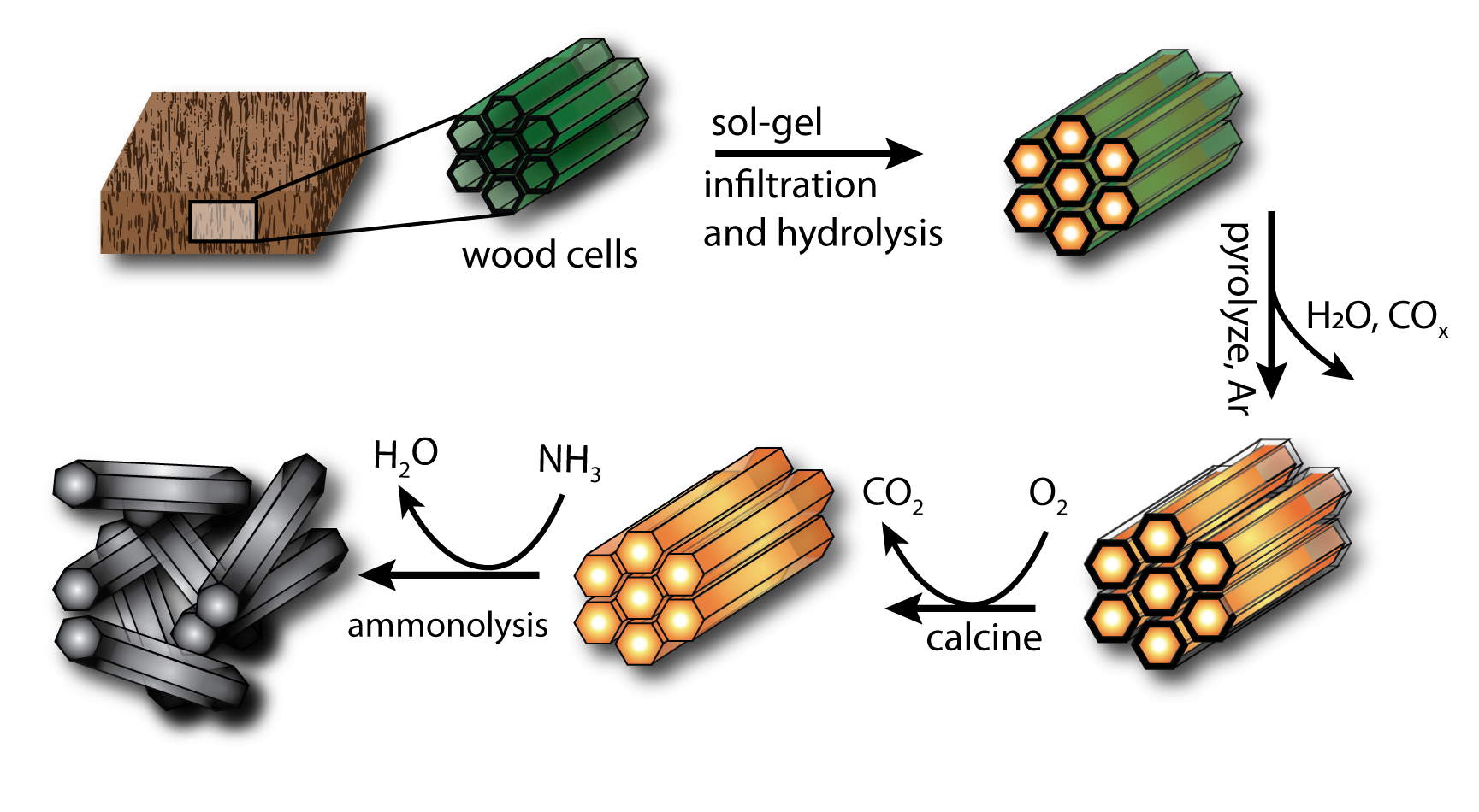 Inverse biometric templating of wood cells with inorganic oxides.