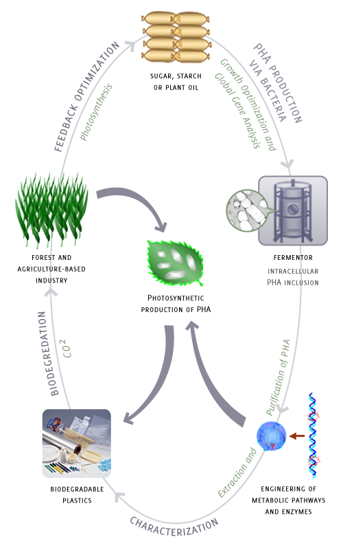 New Process for Biodegradable Plastics Production Using Sugar & CO2