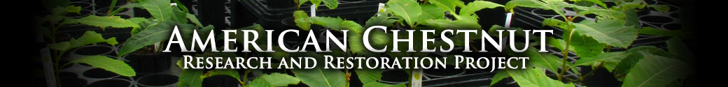 The American Chestnut Research and Restoration Project