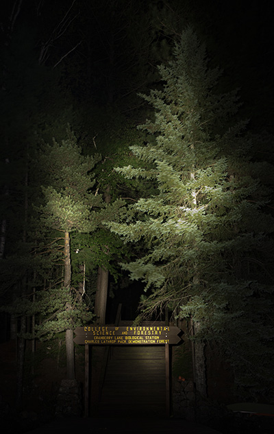 trees and sign at night