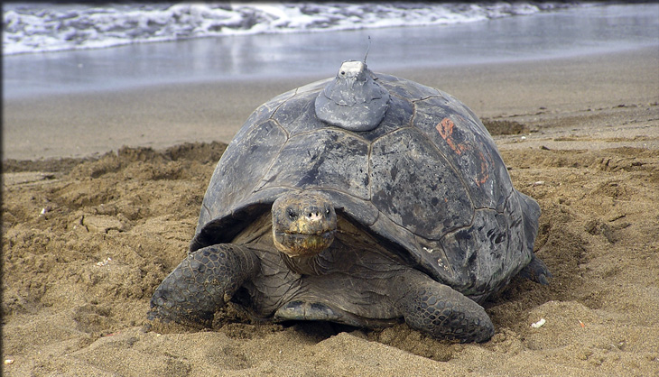 tortoise on the beach