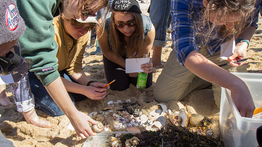 students studying shells