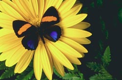 image of flower and butterfly