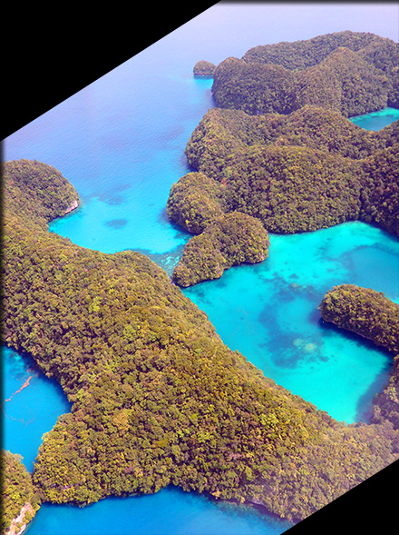 The Rock Islands in the Republic of Palau harbor a rich lowland rainforest biota full of endemic and indigenous species of land snails, birds, plants, insects, snakes and lizards.