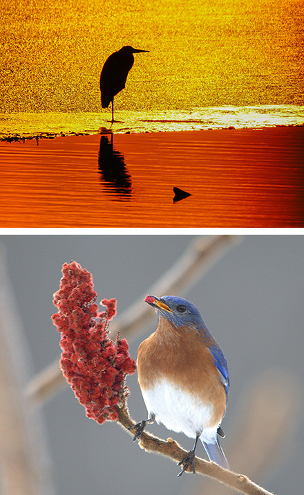 The bluebird image is by Cheryl Lloyd and the sunrise is by John Savage