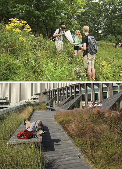 Above: students on the no-mow hillside zone. Below: green roof on the ESF Gateway Center; all the plants are native species from eastern Lake Ontario dunes and alvar pavement barrens at the northeastern end of Lake Ontario.
