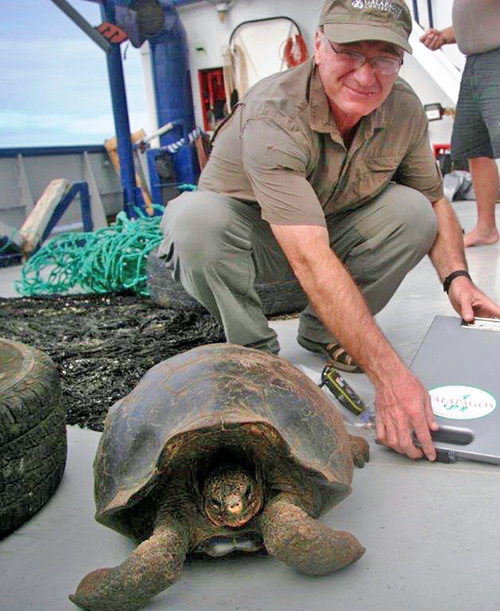 Dr. James Gibbs with tortoise relocated from Wolf Volcano on Isabela Island