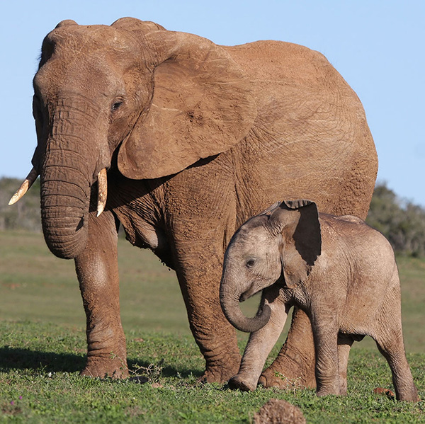 A new study says large animals such as elephants are no more or less fit for survival than tiny microscopic species.