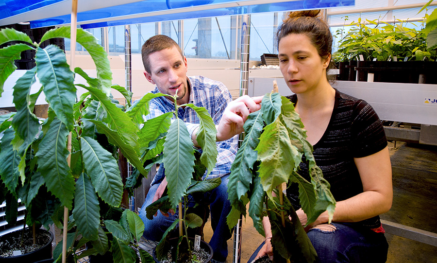 Researchers with Chestnut saplings in greenhouse