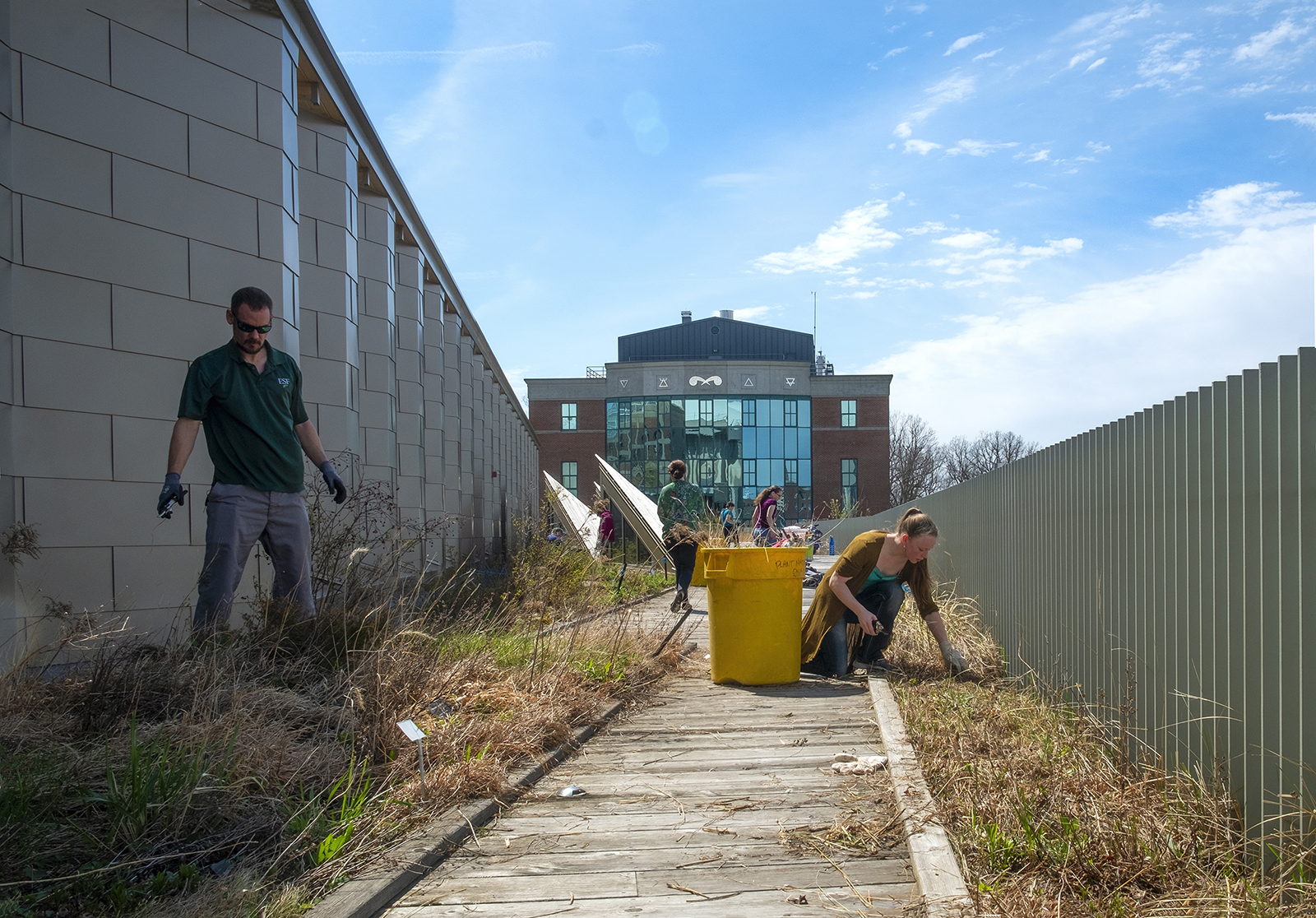 ESF students clean up the green roof on the Gateway Center