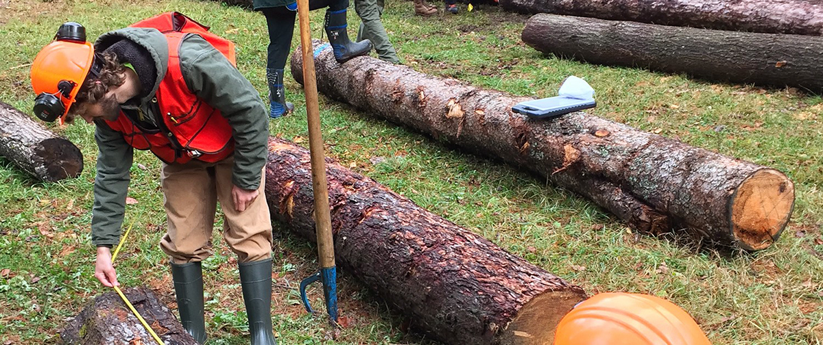 Students gain experience with timber and forest management at ESF