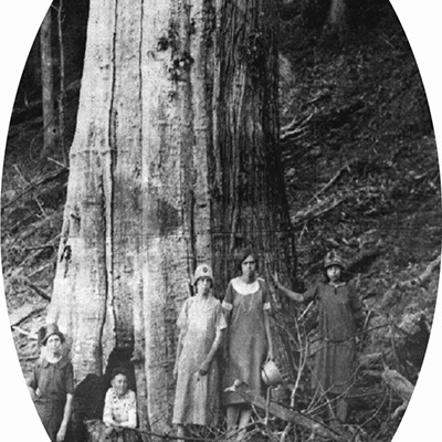 historic photo of chestnut tree and people