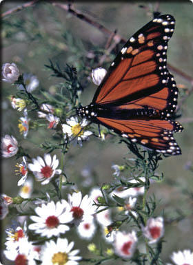 picture of flower and butterfly