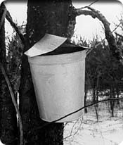 bucket for maple syrup