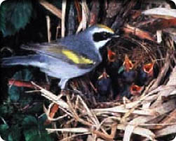 Image of a bird feeding its babies