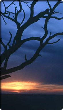 Image of a bare tree and sunset