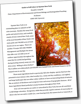 Why Leaves Change Color  Informative Essay also First Day Of High School Essay Friendship Essay In English