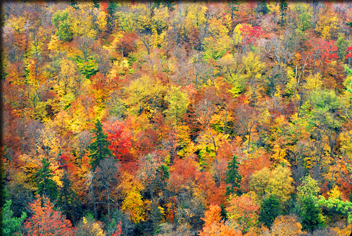 image of trees changing colors in the fall