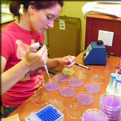 preparing petri dishes