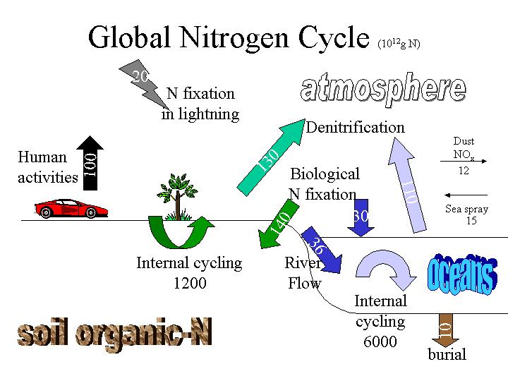 Nitrogen global nitrogen cycle ccuart Image collections
