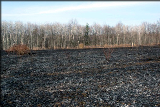 burned field