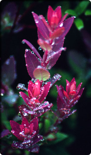 Image of a plant from Honduras