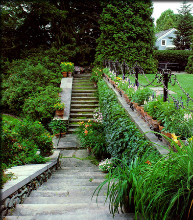 Mossy Stairs in Garden
