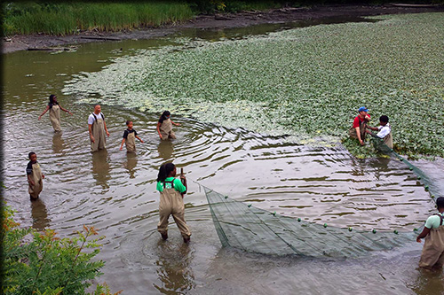 students wading in the lake