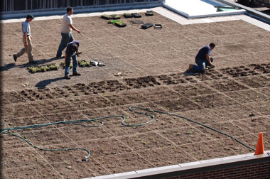 Green Roof Planting