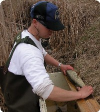 measuring northern pike