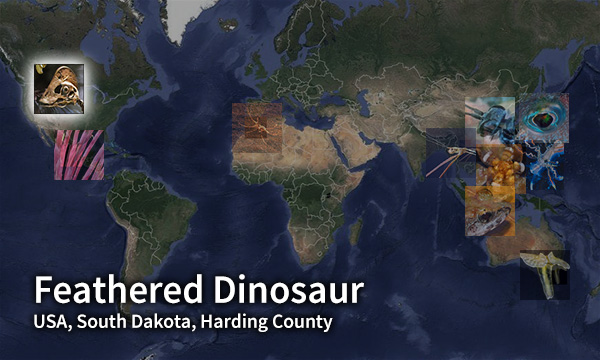Feathered Dinosaur map