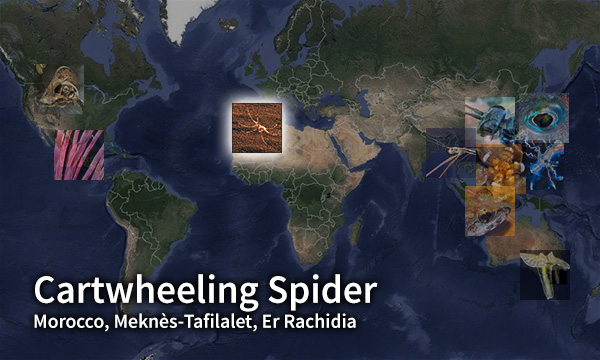 Cartwheeling Spider map