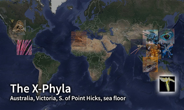 X-Phyla map