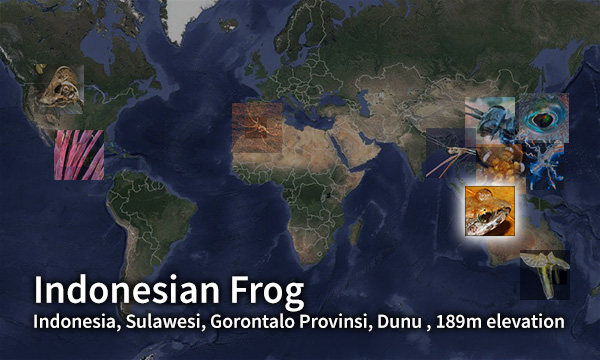 Indonesian Frog map