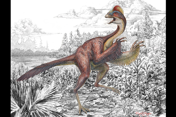 Feathered Dinosaur Drawing