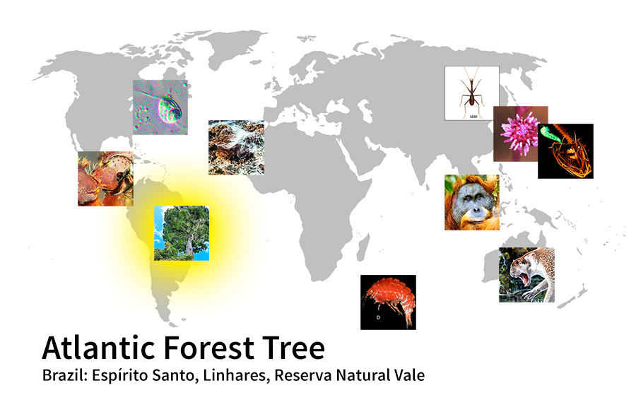 map showing location of Atlantic Forest Tree Brazil: Espírito Santo, Linhares, Reserva Natural Vale