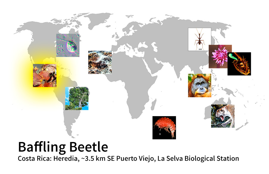 map showing location of Baffling Beetle Costa Rica: Heredia, ~3.5 km SE Puerto Viejo, La Selva Biological Station