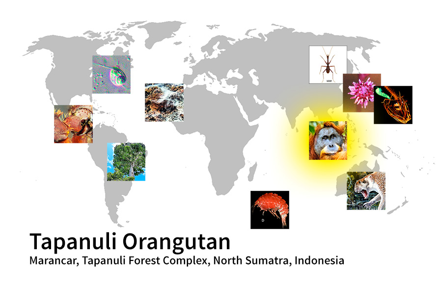 map showing location of Tapanuli Orangutan Marancar, Tapanuli Forest Complex, North Sumatra, Indonesia