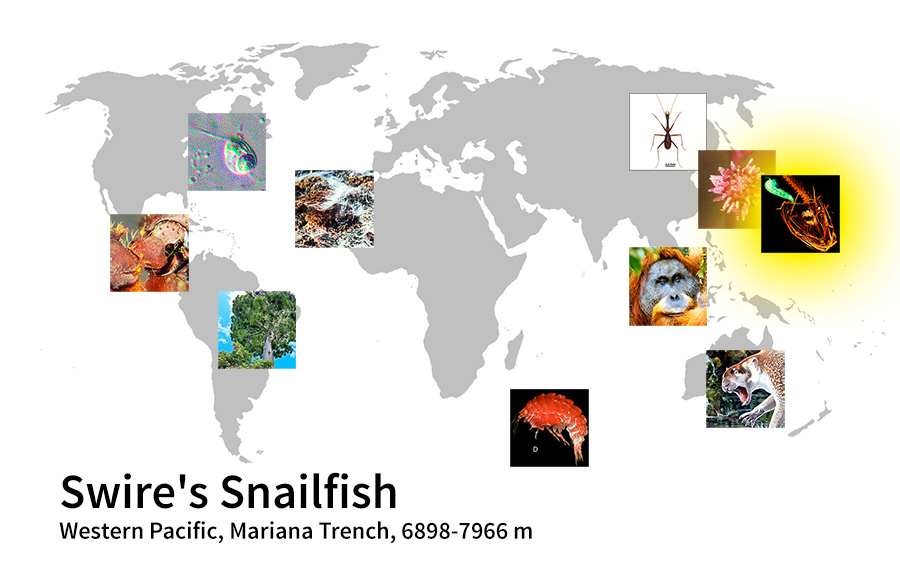 map showing location of Swire's Snailfish Western Pacific, Mariana Trench, 6898-7966 m