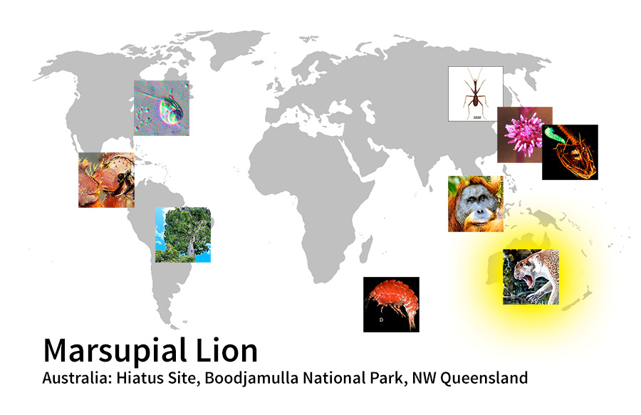 map showing location of Marsupial Lion Australia: Hiatus Site, Boodjamulla National Park, NW Queensland