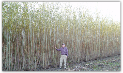 Guy standing next to willows